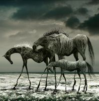 Wild Horses by aspius