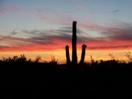 Saguaro Sunset by TimelordWitch10