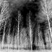 The Witching Wood by DavidCraigEllis