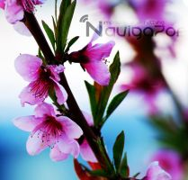 Purle Spirit Of Spring by NaViGa7or