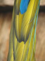 tail feather by NikiljuiceStock