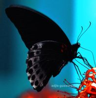 black butterfly by adjieguswara-art