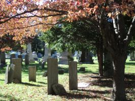 Gravestones and a sunlit tree by calictii