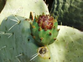 Cactus Flower by LetoCrows