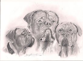 The three Doggy-teers by Smile4daBirdy