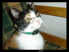 Intelectual Cat by sleepingGhost