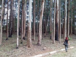 only giant trees by MichelleChui