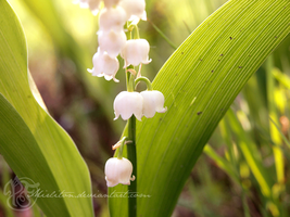 lily of the Valley by Mirliton