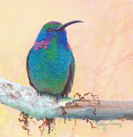 Evening Mist - Violet-eared hummingbird by KathleenCasey