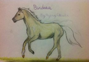 Bindana by Flyingfetlocks