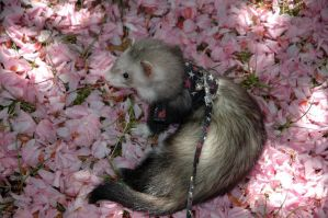 Cheza in the Flowers by Allhailtotheferrets