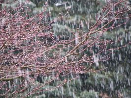Spring Snow 4 by Casperium