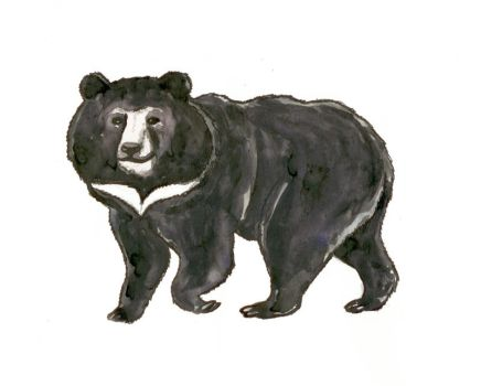 Asian black bear, the moon bear or white-chested b by mama-Lua