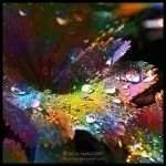 Rainbow Diamonds by Lilyas