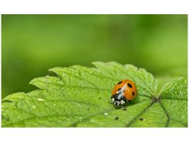 Lady Bug by gregorland
