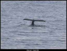 Whale tail 2 by irrational1