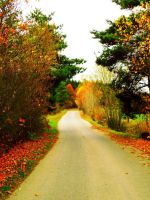 Autumn colors by EricaOscura