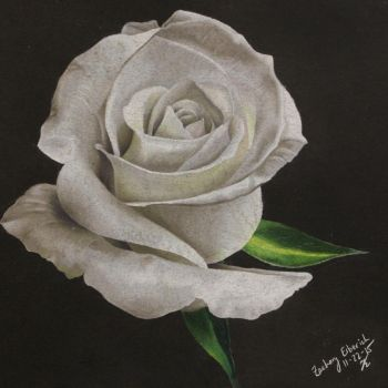 White Rose by jack12321