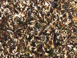 Texture - Leaflitter - Oak by markopolio-stock