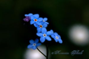 Forget Me Not by KerovinBlack