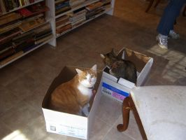 If We Fits, We Sits by Hannah2070