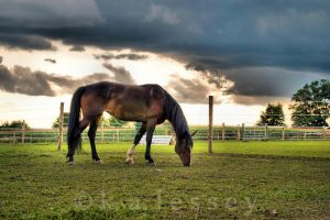 Graze Before the Storm by Zephania