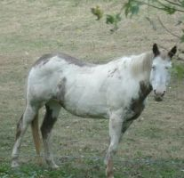 White and brown horse by Catsie95