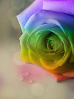 Rainbow Rose by MeganLeeRetouching