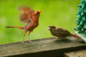 Cardinals 5 by EJordanPhoto