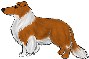 Rough Collie: Sable by Colliequest