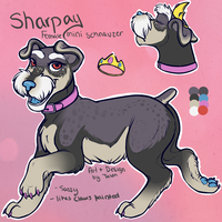 OC: Sharpay the Princess Mini Schnauzer by TalonEX