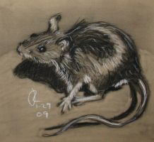 deer mouse by jrlincoln9