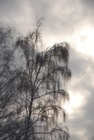A Trace of Winter Mourning by Nikki-vdp