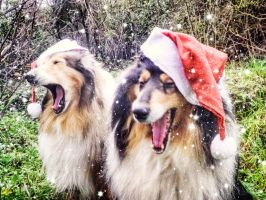 Double Yawn Dogs by hermio