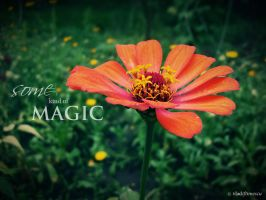 Some Kind Of Magic by Vladiftimescu