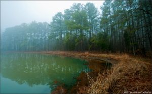 Fog Pond by lizzys-photos