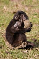 4890 - Macaque by Jay-Co