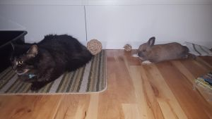 Cat/Rabbit Stock~ Koggy and Sorsha 5 by ChellytheBean