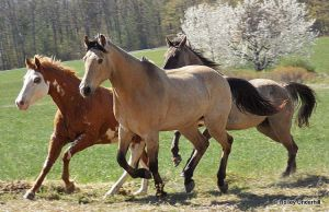 Horses of a different color. by ThunderhillPaints