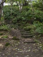 Forest Steps 1 by mindCollision-stock