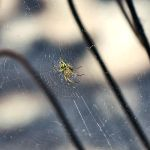 Lonely spider by anelia
