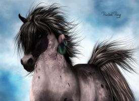 Painted Pony by Dani3D