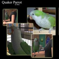 Quaker Parrot for the Sims 2 by Ulario