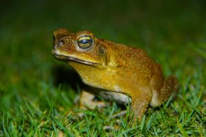 Toad by ReptiReptilez