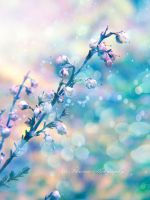 Blue by Floreina-Photography