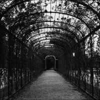 alley of roses by PsycheAnamnesis