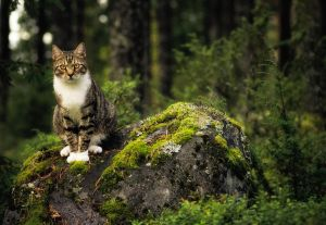 Vili In The Forest by JoniNiemela