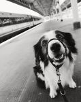 Waiting for the Train by micromeg
