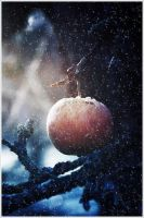 The winter apple by emzofc