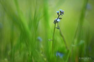 Green and blue by Lidija-Lolic